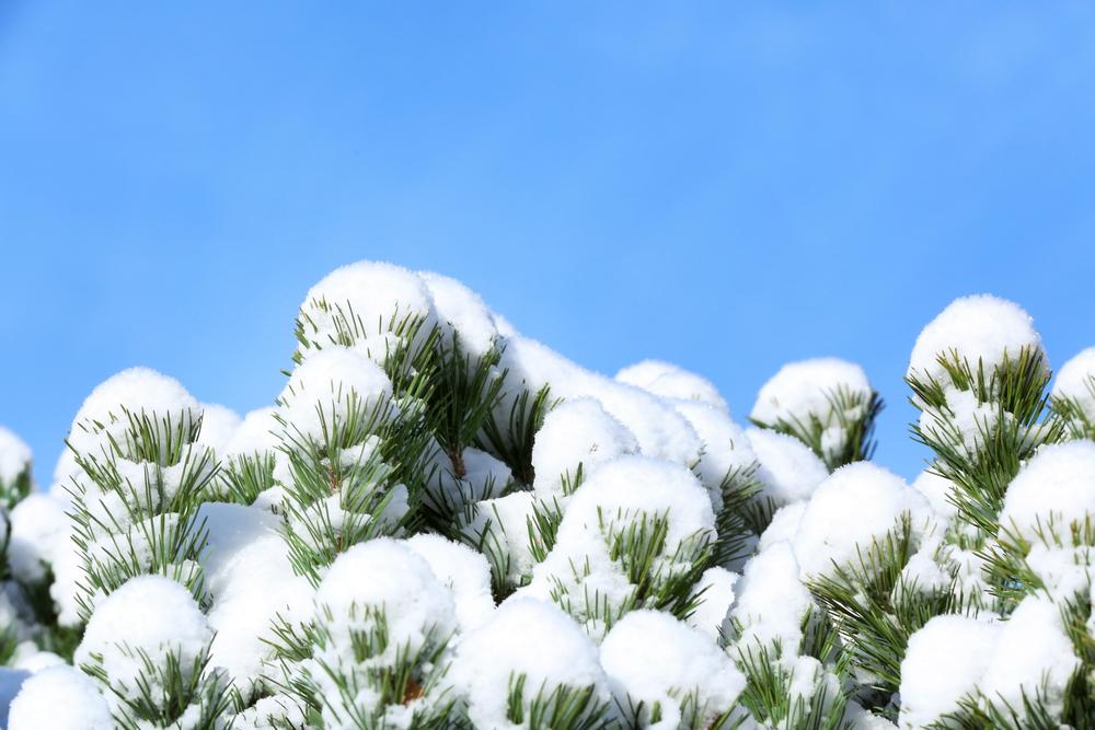 concrete damage frost heave