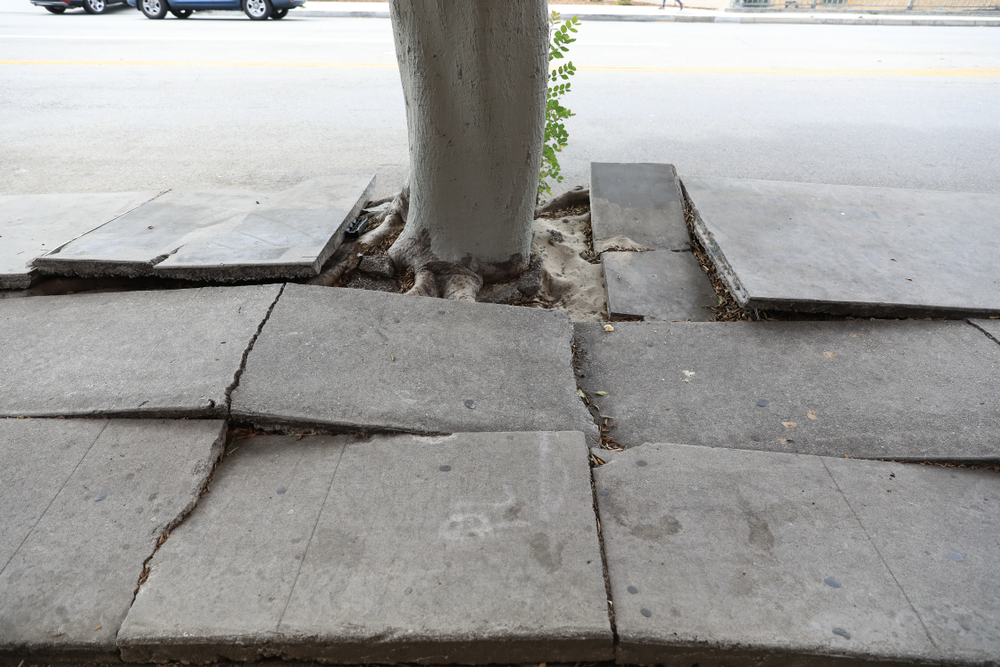 tree root impact concrete foundation
